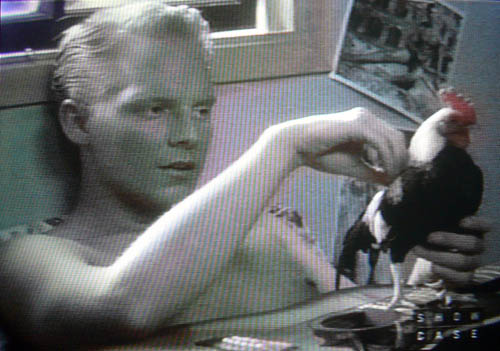 Shirtless Jonathan Torrens lying in bed stroking a rooster